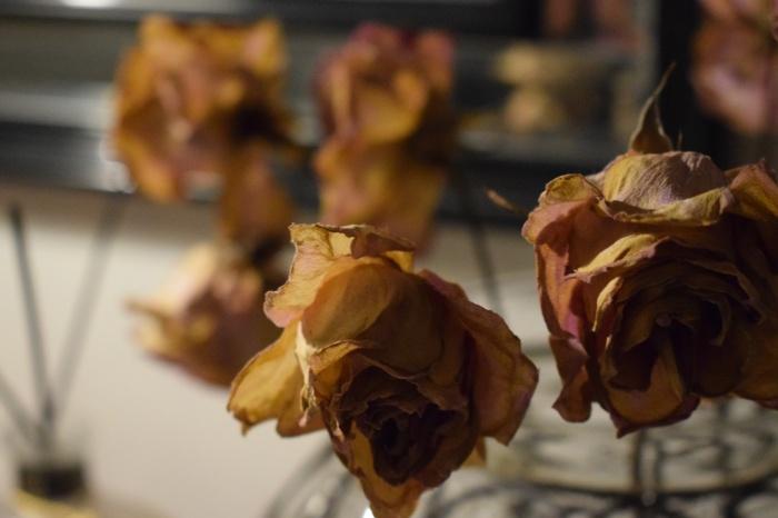torkade rosor 80tal.JPG